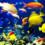 魚がカラフルなのはなぜ?|3つの理由を2分解説!